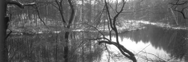 2001–2003 · Walden Pond Revisited